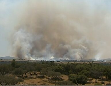 Portugalia: łąka się zapaliła, bo... obok przejechał pociąg