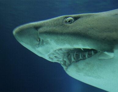Tajemniczy morski potwór pożarł trzymetrowego rekina
