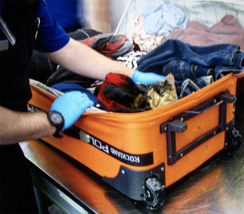 Kot przemycany w bagażu nazywał się Slim (Chudy)