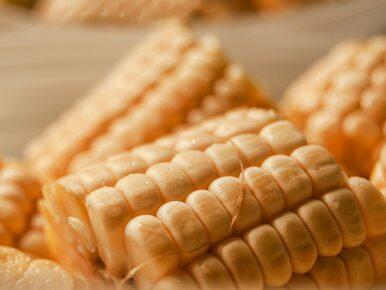 Wszystko, co musisz wiedzieć o kukurydzy