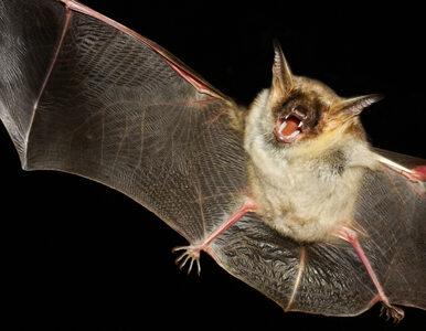 WWF: Ochrona dzikiej przyrody może zapobiec kolejnym epidemiom chorób...