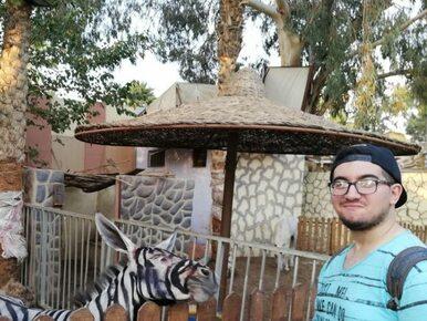 Zoo potrzebowało zebry, więc pomalowano osła? Temperatura ujawniła oszustwo