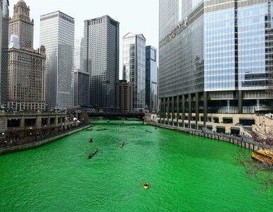 Zielona Chicago River. Tak świętowany jest Dzień św. Patryka