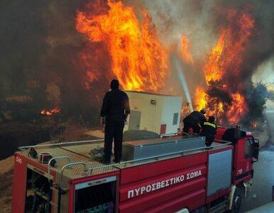 Wielkie pożary lasów w Grecji. Chmury dymu było widać 40 kilometrów dalej