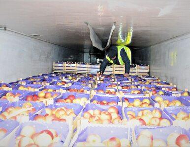 Wjechali do Polski nielegalnie, byli ukryci w transporcie jabłek. Jedli...