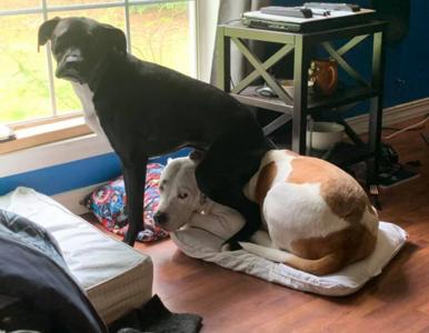 """Te psy nie cieszą się z obecności """"rodzeństwa"""". Ich zdjęcia nie wymagają..."""
