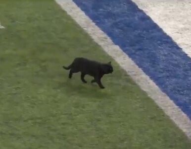 Czarny kot na boisku podczas meczu. Ludzie dopingowali zwierzaka