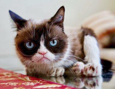 Grumpy Cat nie żyje. Najpopularniejszy kot w internecie żył siedem lat