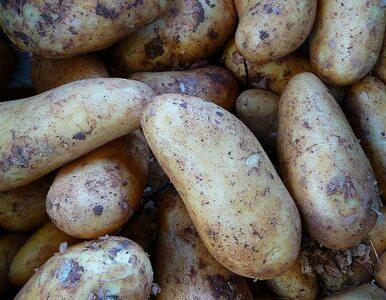 Ziemniaki tańsze o połowę niz rok temu