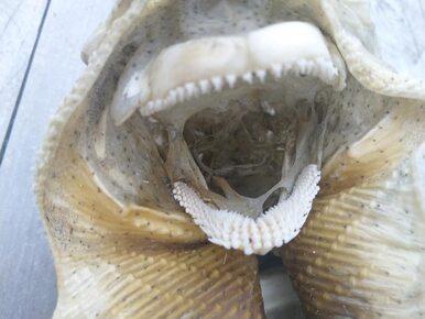 Kosmita, a może potwór z oceanu? Szkielet znaleziony na plaży rozbudził...