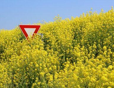 """Biotechnolodzy krytykują rząd. """"Ustawa o GMO hamuje postęp"""""""