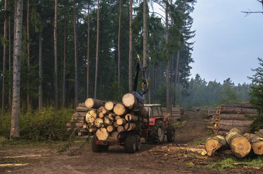 Wycinka drzew, zdjęcie ilustracyjne