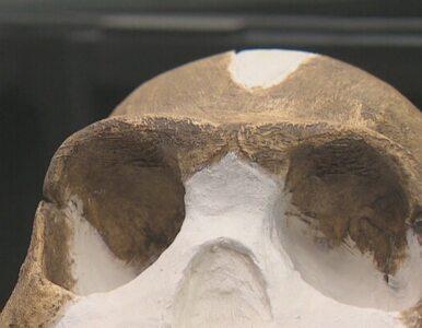Odnaleziono nieznanego praprzodka człowieka - homo naledi