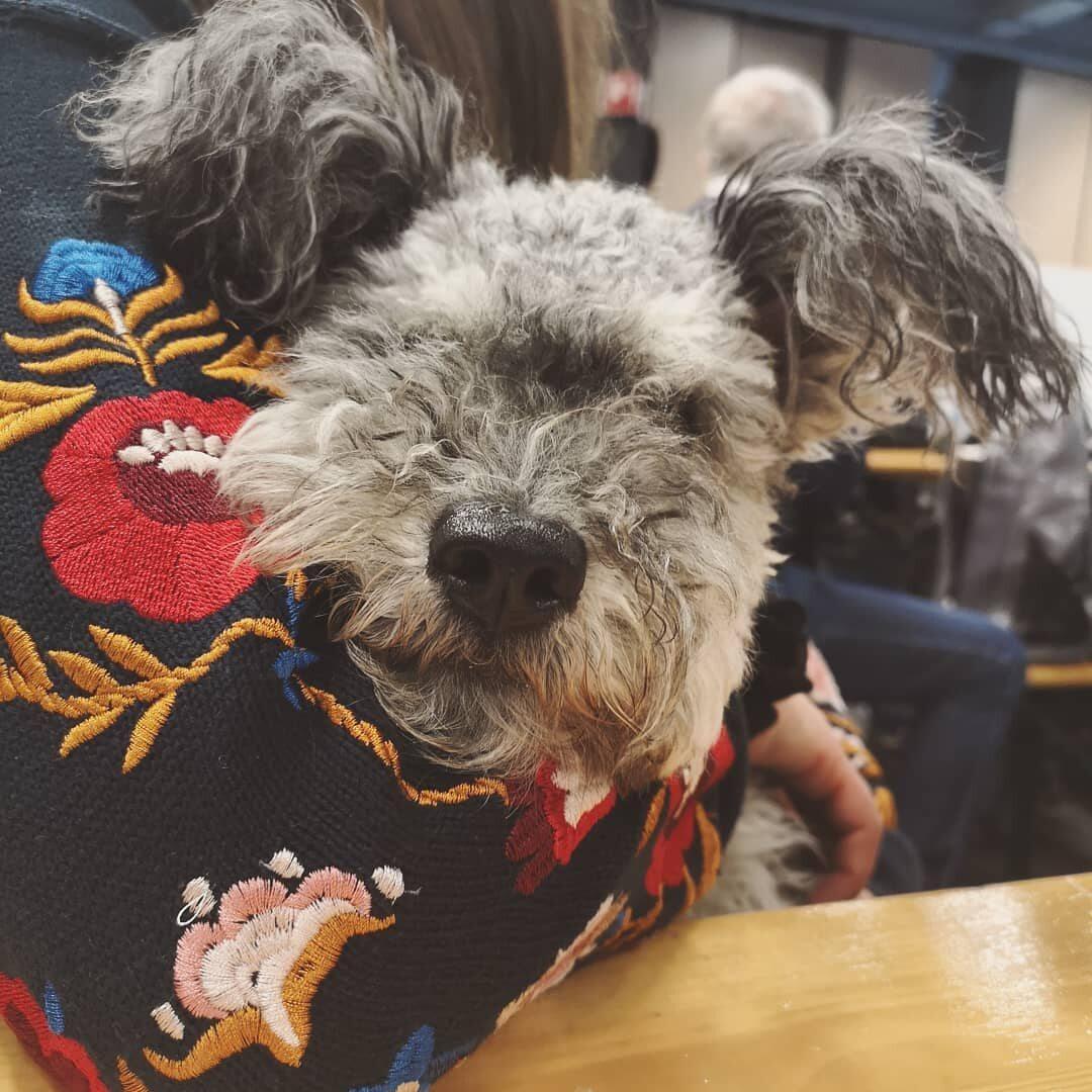 Tchai, Q'smi i ich psi przyjaciele