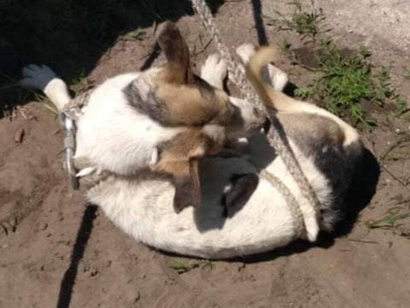 Uratowany pies