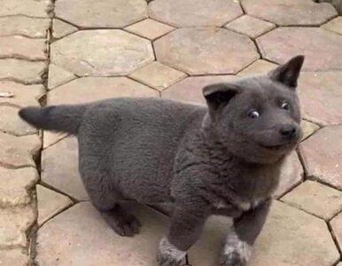 To pies czy kot? Urocze zwierzę skradło serca internautów