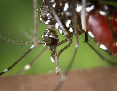 Jakie choroby może przenosić komar?