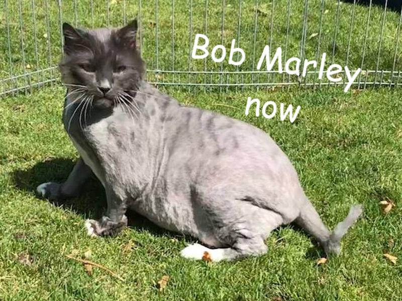 Kot Bob Marley już po wizycie u fryzjera