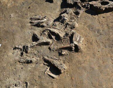 Lud opisany przez Herodota mógł zamieszkiwać Podkarpacie. Odkryto osady...