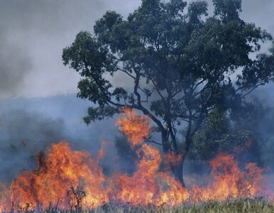 Pożar w Biebrzańskim Parku Narodowym. Płoną cenne przyrodniczo bagna....